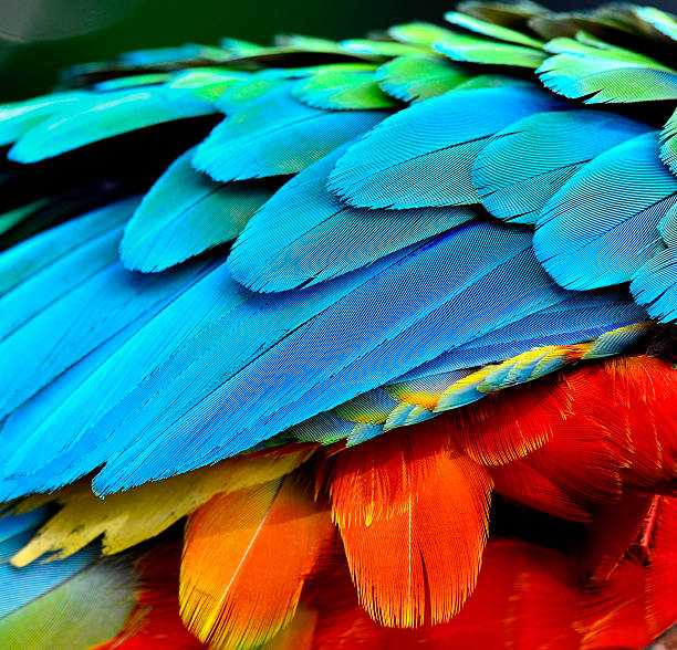Close up of parrot and macaw bird feathers picture id469927256?b=1&k=6&m=469927256&s=612x612&w=0&h=ejig6fhstaevcyxlgxv8hq5hjnvjqhktlmpkekkrh84=