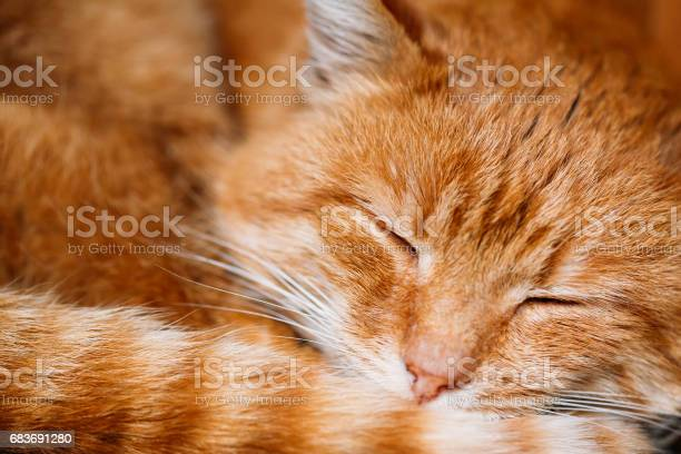 Close up of peaceful red cat curled up sleeping in his bed picture id683691280?b=1&k=6&m=683691280&s=612x612&h=hnm vwb1hr32oidm2hzfhn64nqmcwknryjt0fkkpwx4=