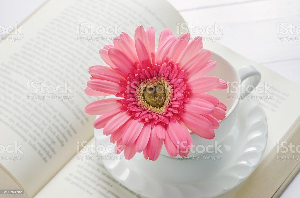 Gros Plan De Fleurs De Gerbera Rose Sur Blanc Tasse Photos Et Plus