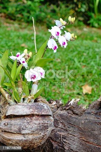 Purple orchid branch (black background)