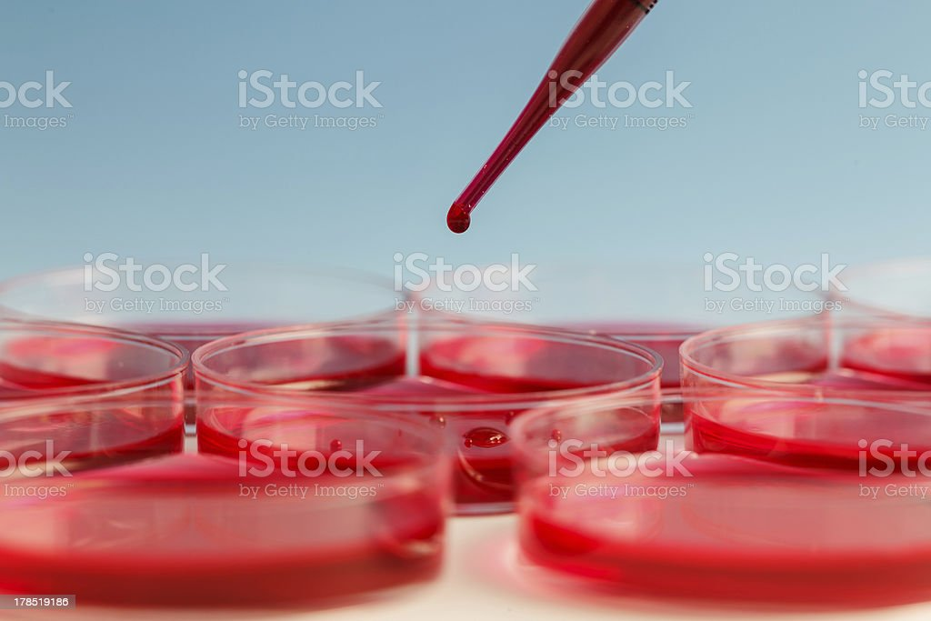Close up of pipette adding red liquid to Petri dish stock photo