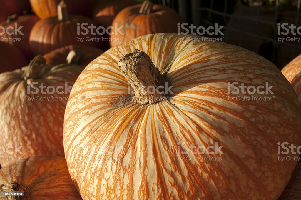 close up of pumpkin stock photo