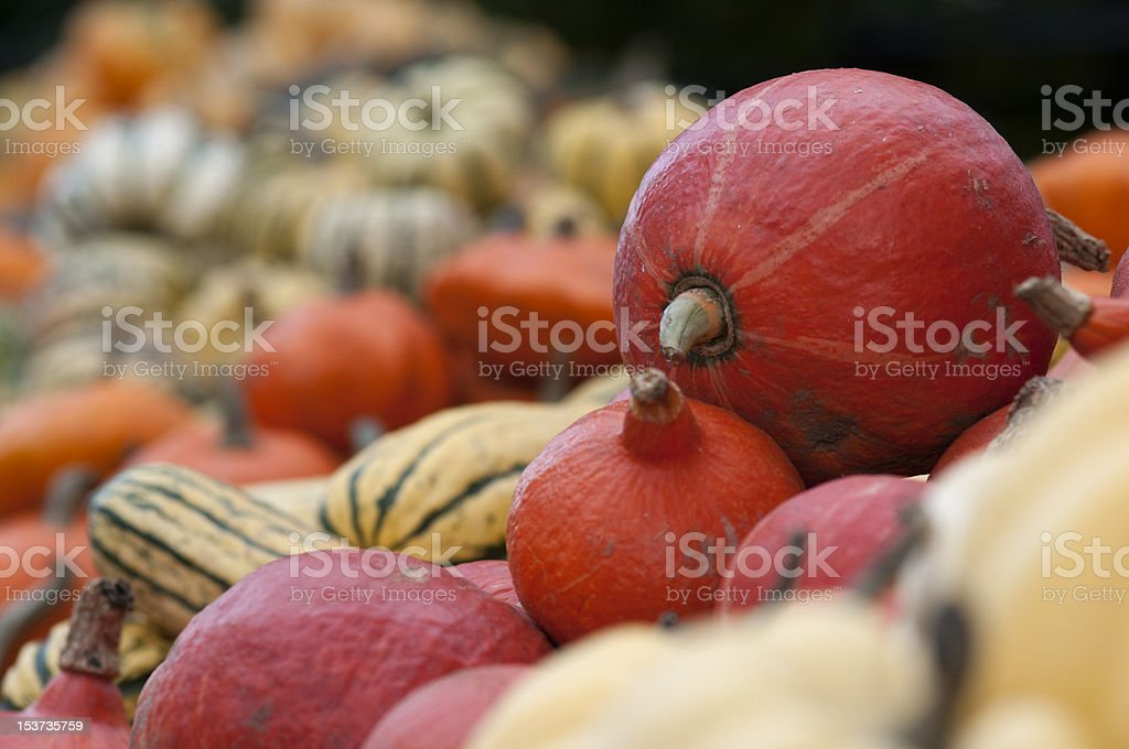 close up of pumpkin with farm produce stock photo
