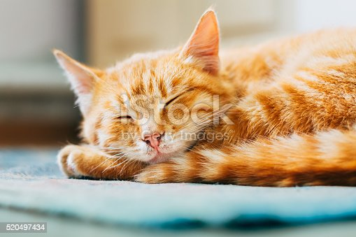 istock Close up of Red Cat Curled Up Sleeping in Bed 520497434