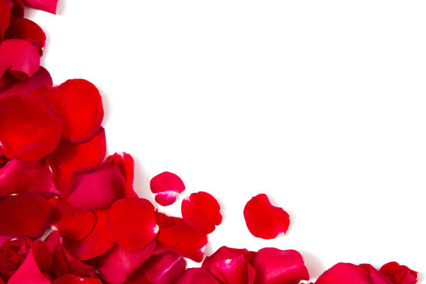 close up of red rose petals with copyspace - rose petals stock pictures, royalty-free photos & images