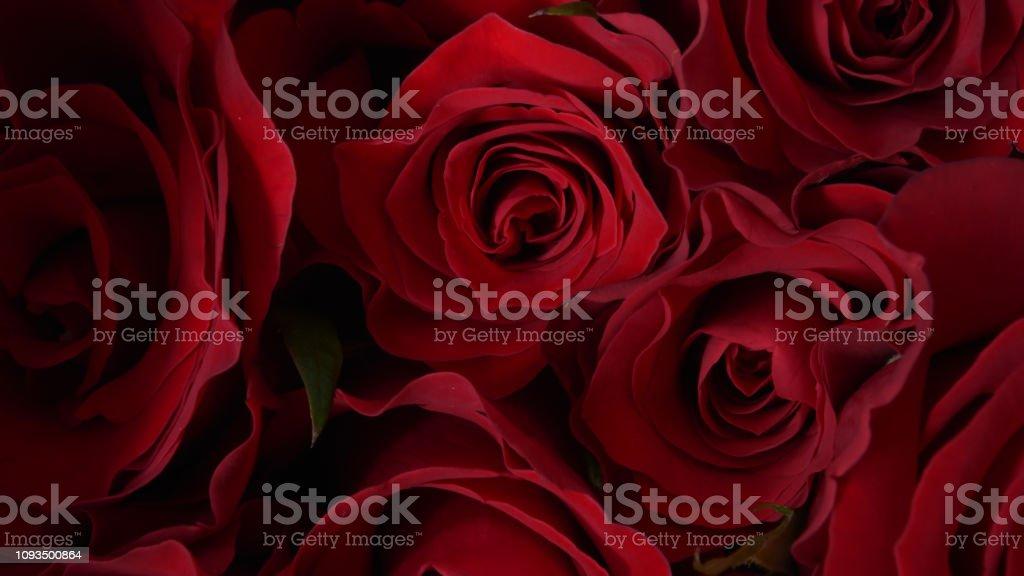 close up of red rose - Zbiór zdjęć royalty-free (Aranżacja)