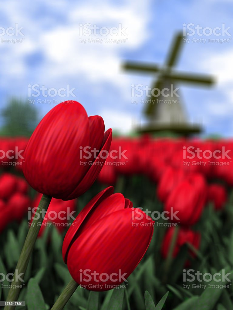 Close up of red tulips in Holland royalty-free stock photo