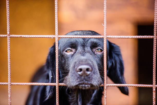 Close up of sad black dog in cage - Photo