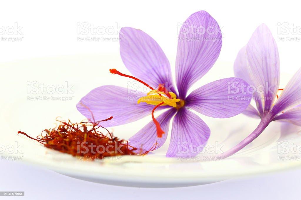 Close up of saffron flower and dried saffron spice stock photo