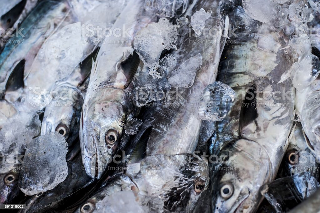 Close up of Scomberomorus cavalla,   king mackerel Fish in the market.; stock photo