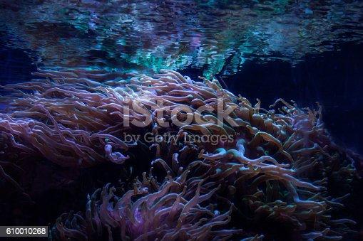 istock Close up of seaweed on the ocean floor. 610010268