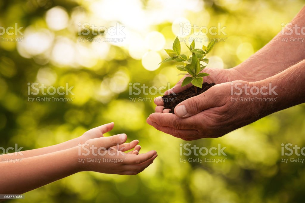 Close up of senior hands giving small plant to a child royalty-free stock photo