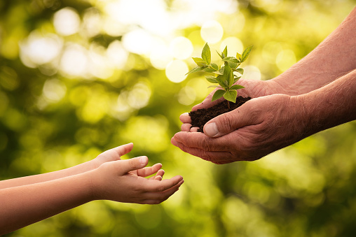 Close up of senior hands giving small plant to a child