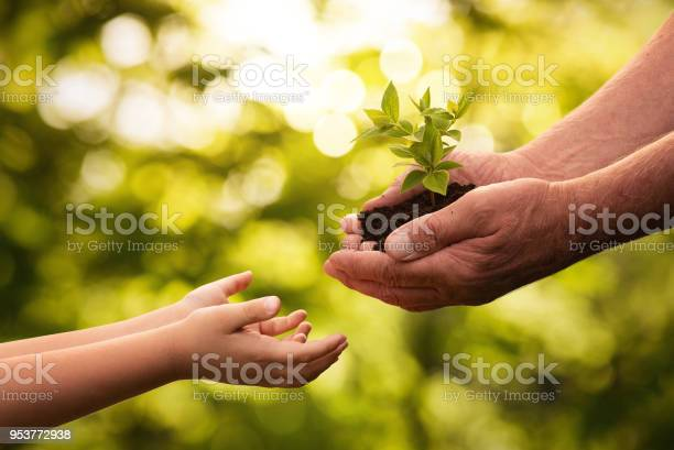 Close up of senior hands giving small plant to a child picture id953772938?b=1&k=6&m=953772938&s=612x612&h=rvqv6yn3kms8l cjwbvbtttbxzkor pk am3iueakb0=
