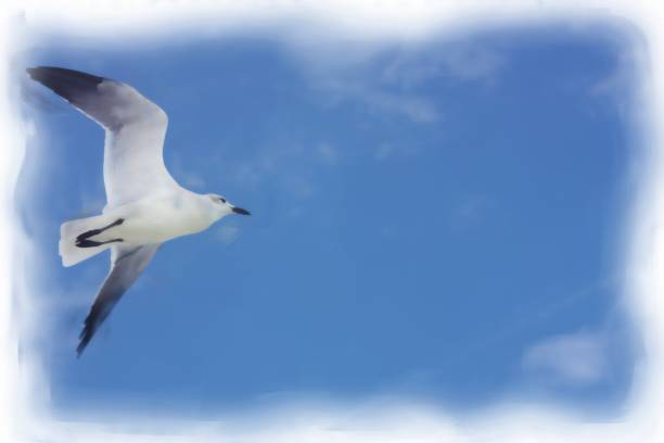 Close up of sesa gull in flight stock photo
