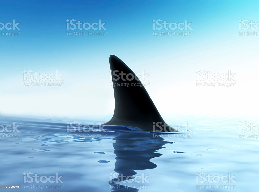 Close up of shark fin above water stock photo