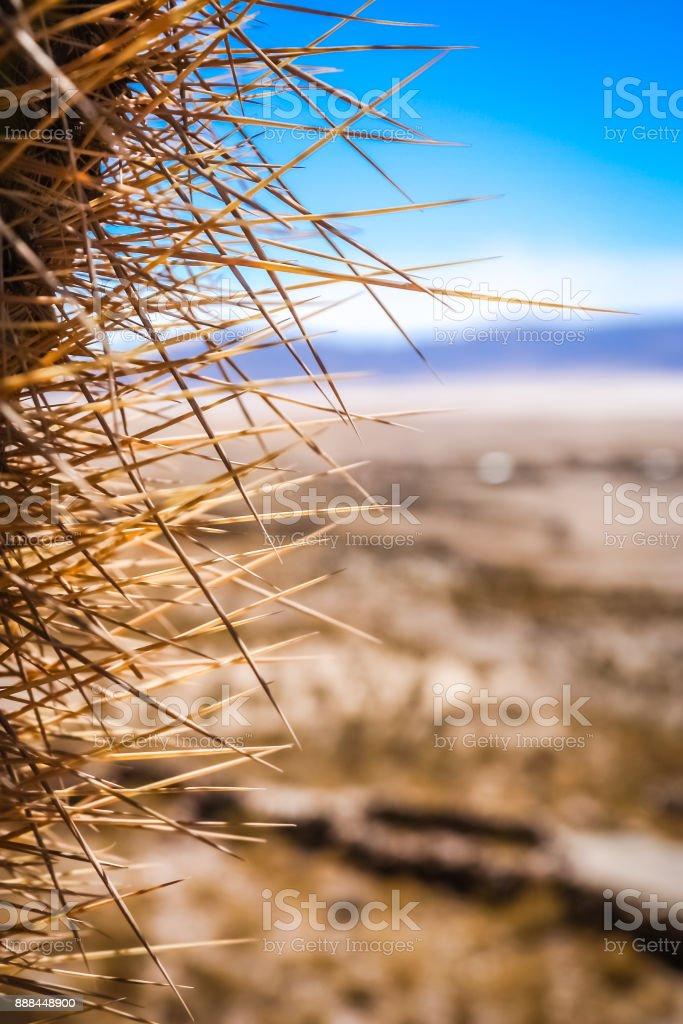 Close up of sharp cactus thorns stock photo