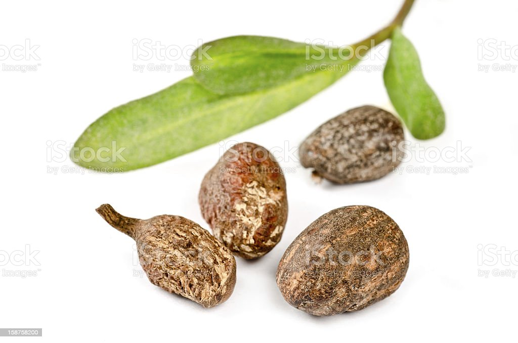 Gros plan de noix de karité - Photo