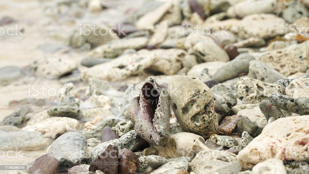 Nahaufnahme von Muscheln an einem Strand auf Union Island in den Tobago Cays von Saint Vincent und den Grenadinen, Karibik. - Lizenzfrei Fotografie Stock-Foto