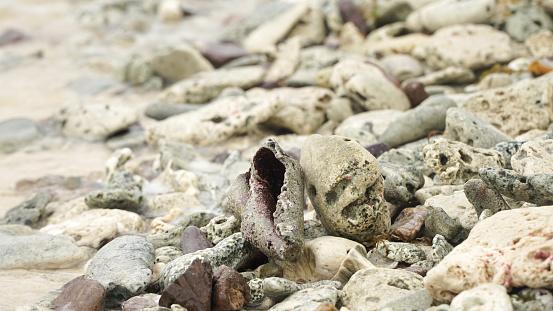 Nahaufnahme Von Muscheln An Einem Strand Auf Union Island In Den Tobago Cays Von Saint Vincent Und Den Grenadinen Karibik Stockfoto und mehr Bilder von Fotografie