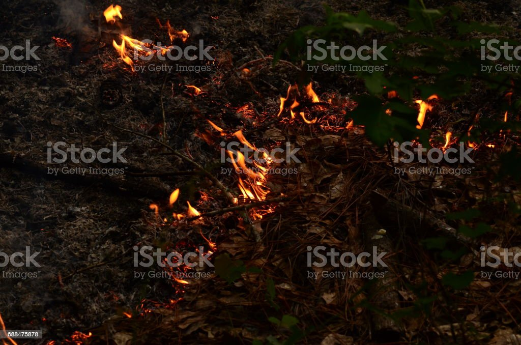 Close up of slow moving flames in forest undegrowth stock photo