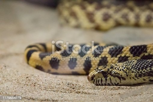 Close up of Snake in Sand
