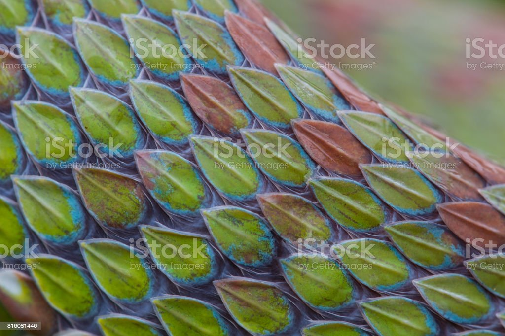 close up of snake skin texture stock photo