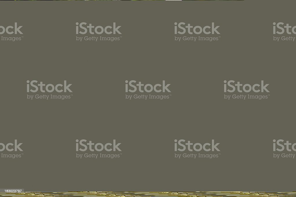 Close up of sniffing dog in profile against sea royalty-free stock photo