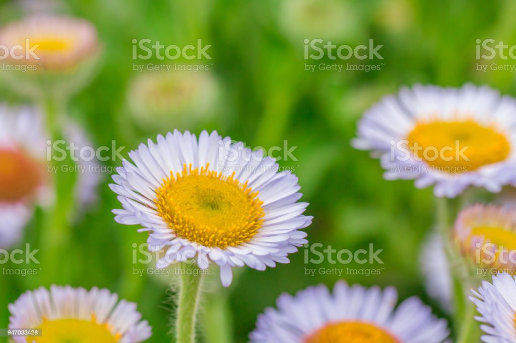 Close Up Of Soft Purple Flowers In The Gardan Stock Photo