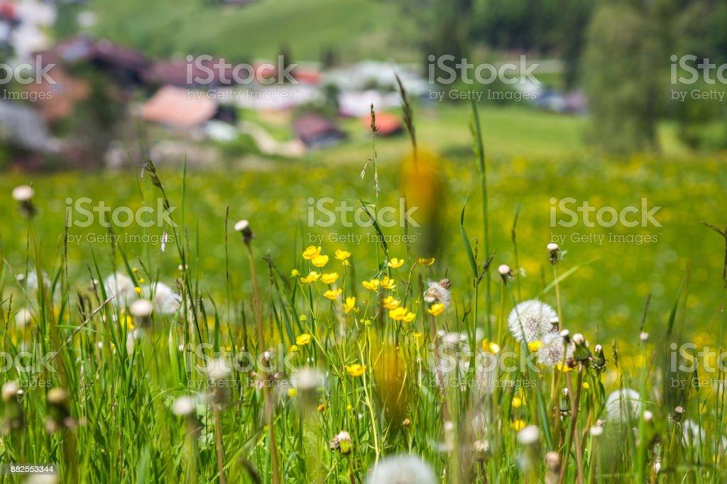 Nahaufnahme von ein paar Blumen in Berchtesgaden, Bayern, Deutschland – Foto