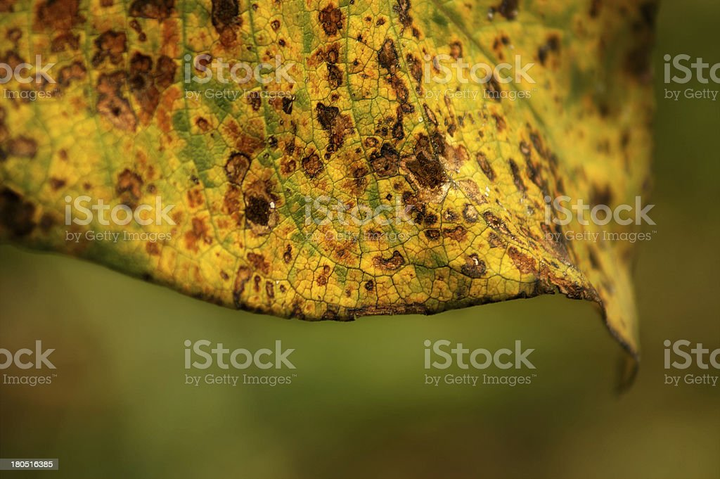Close up of spotted brown and yellow leaf stock photo