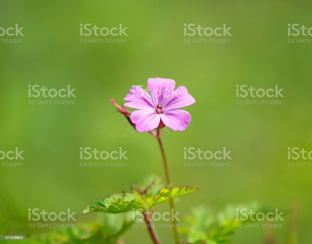 Close Up of Spring Flower in Green Background royalty-free stock photo