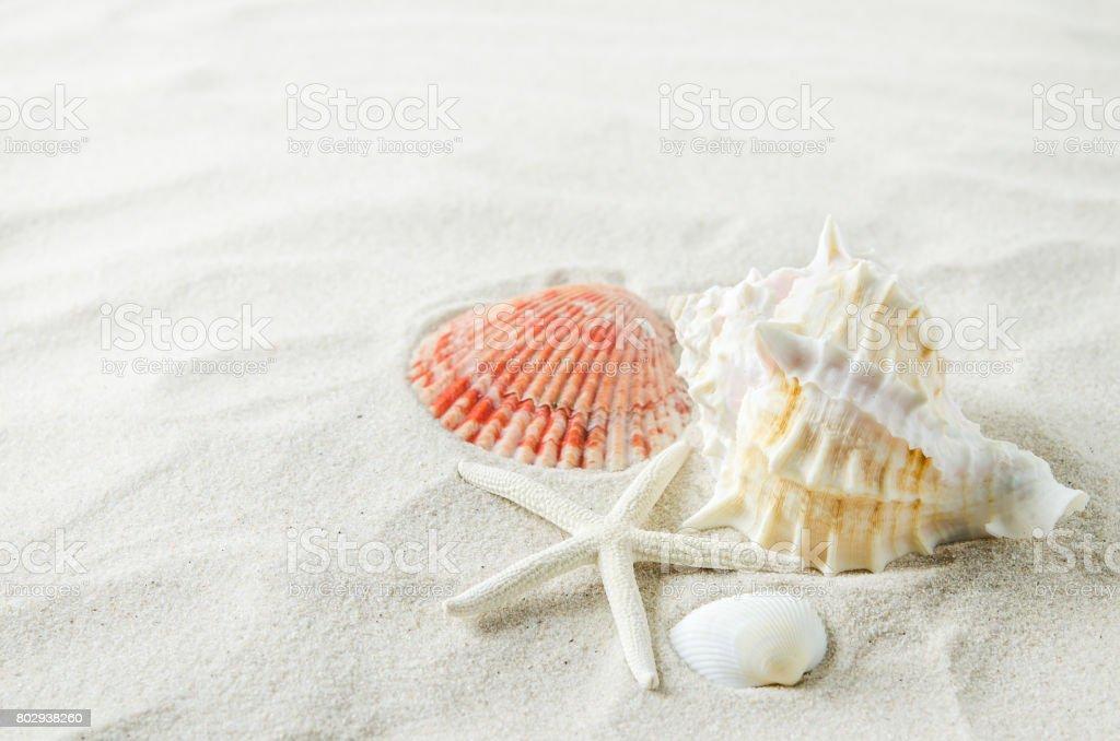 Deniz yıldızı ve kabukları beyaz kum zemin üzerine yakın çekim stok fotoğrafı
