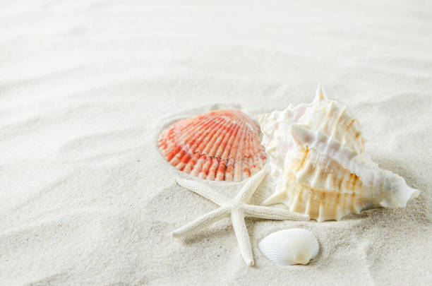 Close up of starfish and seashells on white sand background stock photo