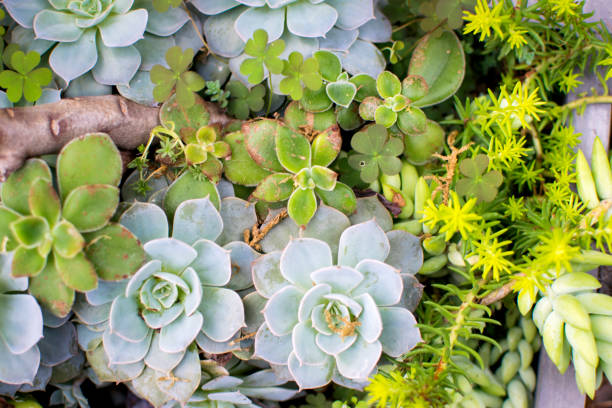 A close up of Succulant Plants in the Greenhouse stock photo
