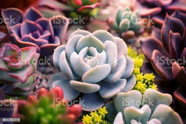 Photo of Close up of succulent plants set backgruond
