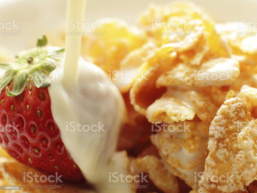 close up of sugar corn flake royalty-free stock photo