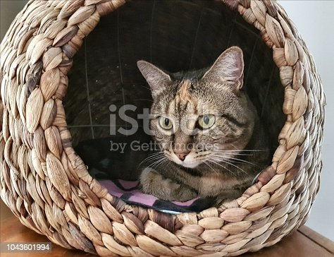 istock Close up of tabby cat laying inside wicker cat bed 1043601994