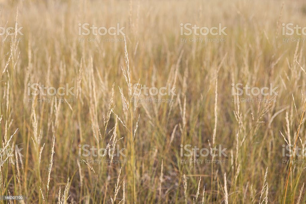 Close up of Tall Grass Prairie in Autumn stock photo
