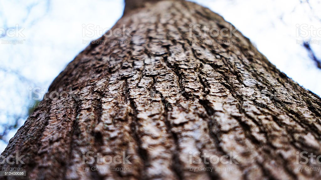 Close up of the bark stock photo