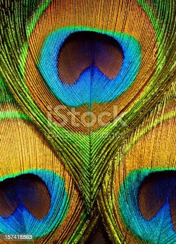 Colorful peacock feathers closeup.
