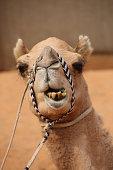 A man riding a camel in the desert