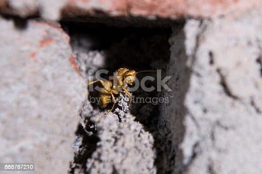 972704120 istock photo Close up of the hornet head 888767210