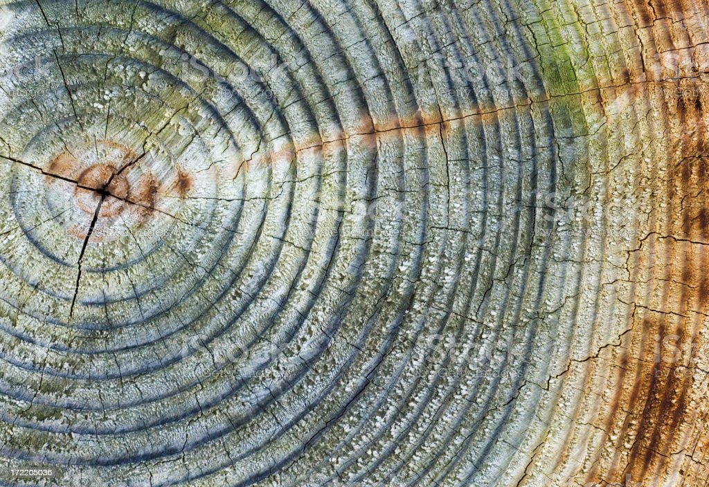 Close up of the rings in weathered wood royalty-free stock photo