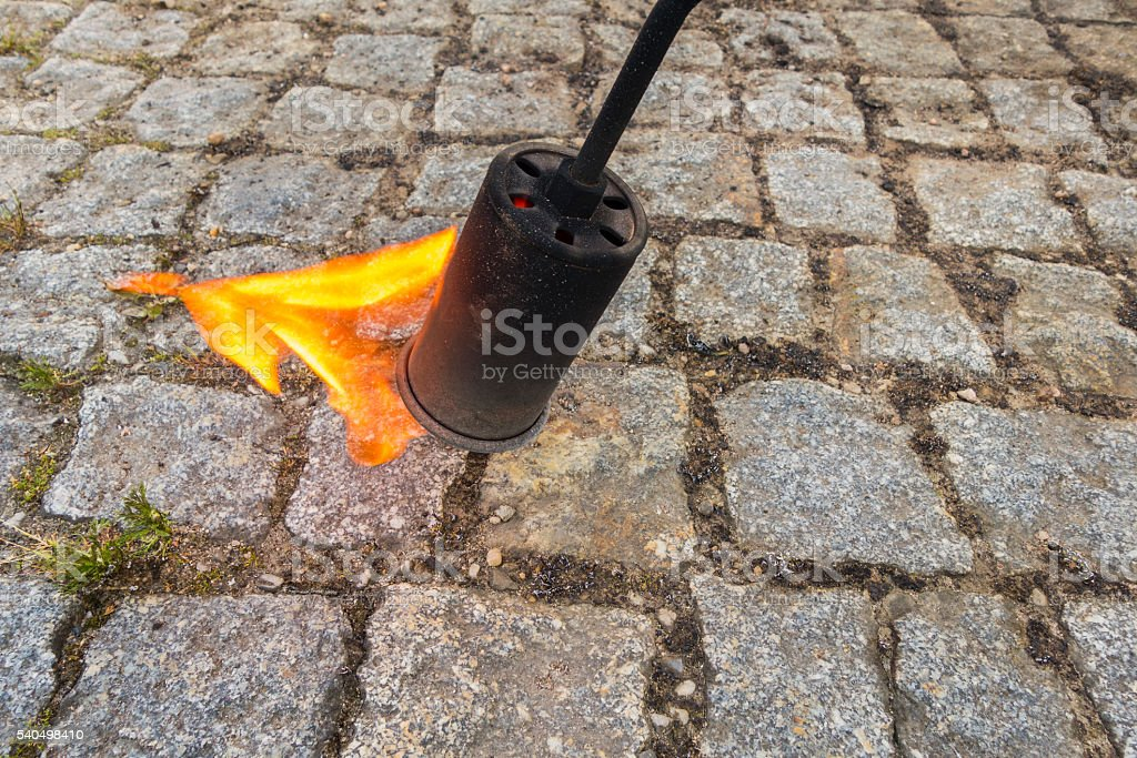 close up of thermal weed control with flame, selective focus stock photo