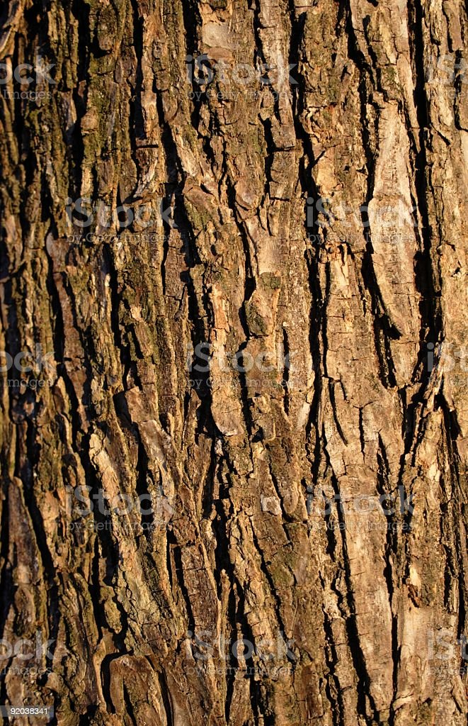 Close up of tree bark in sunlight royalty-free stock photo