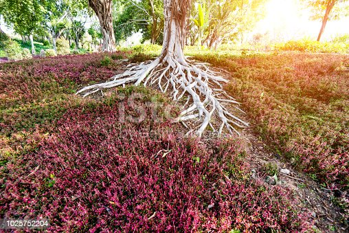 Close up of tree roots.