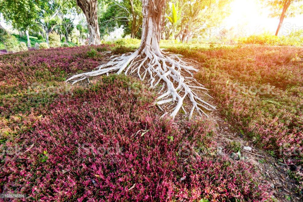 Primer plano de árbol raíces - foto de stock