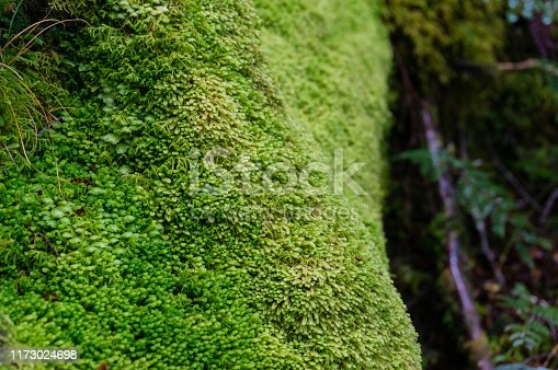 Close up of tree trunk covered with green soft moss. NAture background