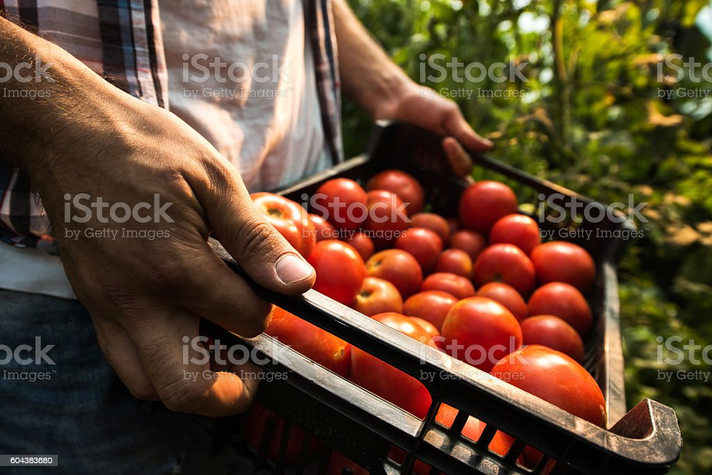 Close up of unrecognizable farm worker holding basket full of...